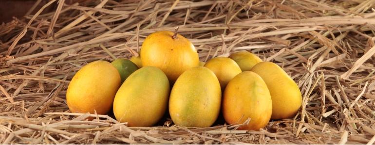 Fresh Devgad Alphonso Mango