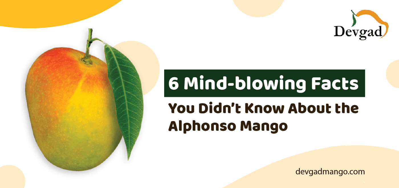 facts about alphonso mango
