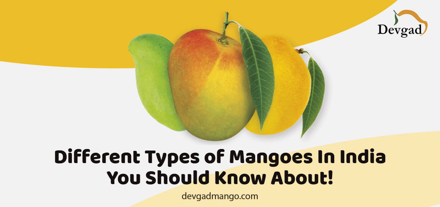 types of mangoes in india